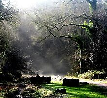 Bishop's Wood by Pippa Carvell
