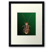 Cockroach Bedazzled Framed Print