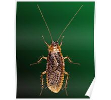 Cockroach Bedazzled Poster