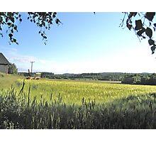 Green Farm Field Photographic Print