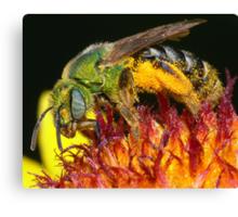 Pollen Party Pooper ! Canvas Print