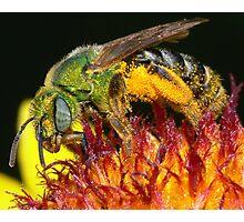 Pollen Party Pooper ! Photographic Print