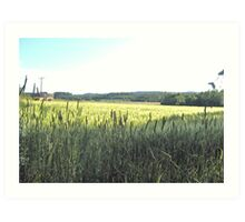 Green Farm Field II Art Print