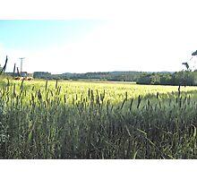 Green Farm Field II Photographic Print