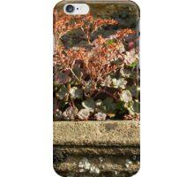 Sherborne Wall Niche iPhone Case/Skin