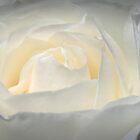 Rose by Keren Smithies