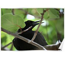 Black Bird Sitting in a Tree Poster