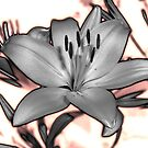 Neon Lily by Zolton