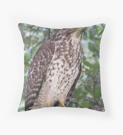 Red Shouldered Hawk of Boca Raton  Throw Pillow