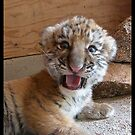 I'm a TIGER! Not a kitty!! by starbucksgirl26