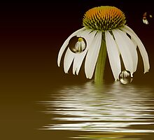 Summer Reflections by Maria Dryfhout