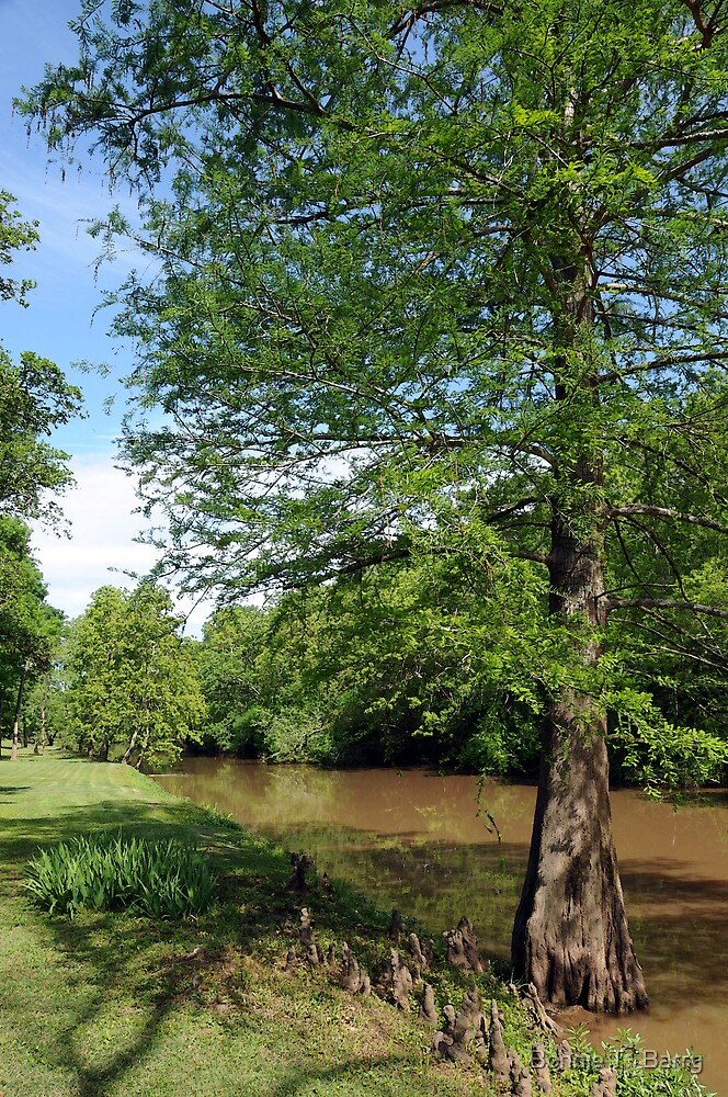 Along the Bayou Teche by Bonnie T.  Barry