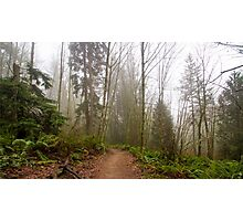Trail Through a Misty Forest Photographic Print