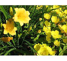Yellow Flowers #2 Photographic Print