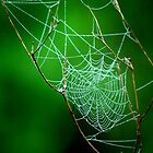 tiny web  by Sharon  Taylor