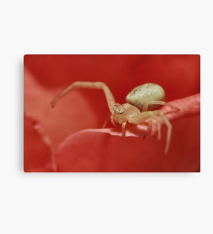 Crab Spider Canvas Print