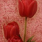 dipinto tulipano rosso by Lorraine Creagh