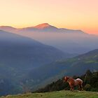 Sunrise Horse by sandgrouse