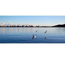 Seagulls on the Swan River Photographic Print