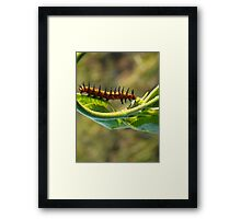 Spike the Caterpiller Framed Print