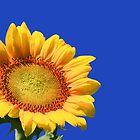 Sunflower Series by Wendy Mogul