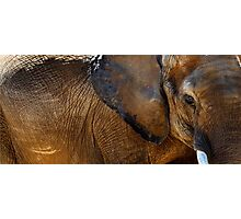 Wall of Elephant Photographic Print
