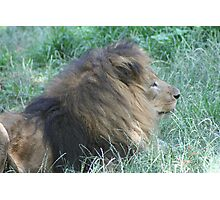 King of the Beasts-Retired Photographic Print