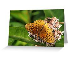 Sharing the milkweed Greeting Card