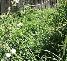 Backyard Grass by Elizaza