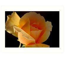THE APRICOT ROSE Art Print