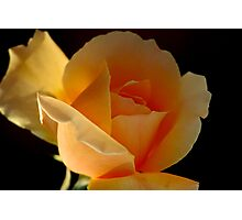 THE APRICOT ROSE Photographic Print