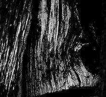 Old Wood by Tom Allen