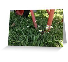 Wheelbarrow and Daisies Greeting Card