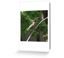 Tri Color Heron Greeting Card