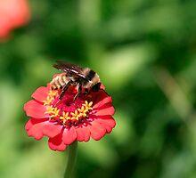 Busy Little Bee by Wendy Mogul