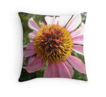 echinacea in summer Throw Pillow