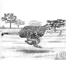Cheetah - Charcoal by Gordon Pegler