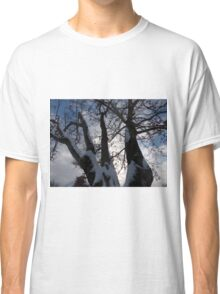 Winter Trees Classic T-Shirt