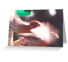 Flying Purple Finch Duo Greeting Card