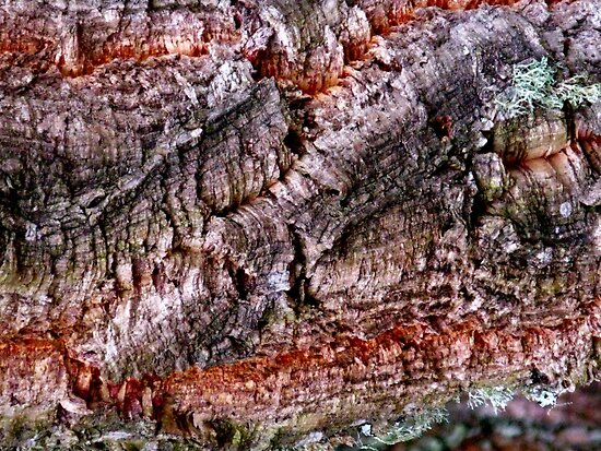 Textured Cork Tree Abstract by Marilyn Harris