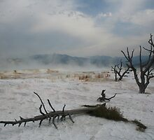 Yellowstone - Scenes of Another World by Patricia Shriver
