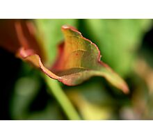 Natural Color Photographic Print
