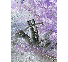 tree stump surrounded by beautiful colors of purple leaves from a childs view Photographic Print