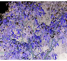 Gorgeous pink & blue ficus tree leaves altered art from a childs view Photographic Print