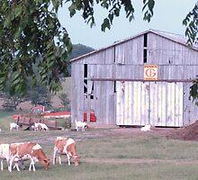 working farm. . . by donna.k. nolan