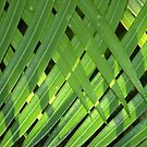 THE PALM CURTAIN by Magaret Meintjes