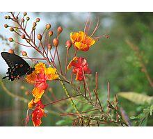Flutter & Sip Photographic Print