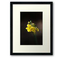 Jonquil Framed Print