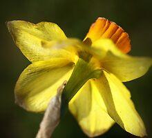 Daffodils Skirt by Joy Watson