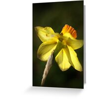 Daffodils Skirt Greeting Card